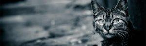 猫のヘッダー